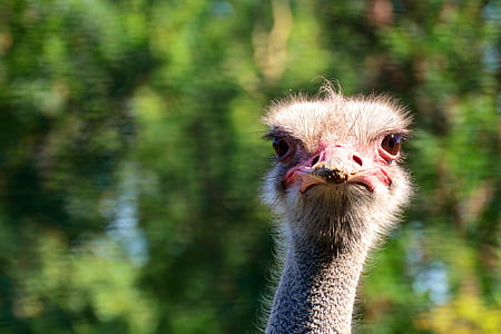 selective focus photography of ostrich