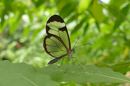 macro shot photography of brown butterfly on top of green leaf during daytime