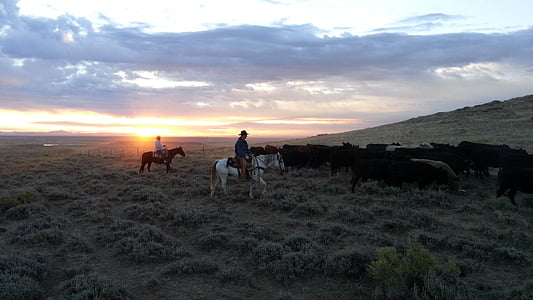 men's riding horses on gray leafed plants field under sunset