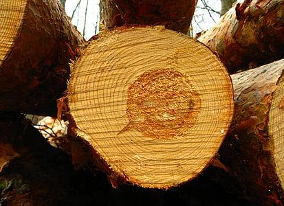 wood slice close up photo