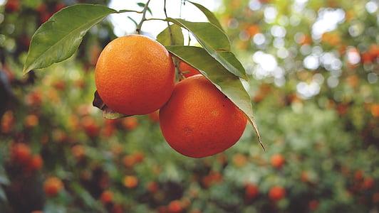closeup photo of three orange fruits