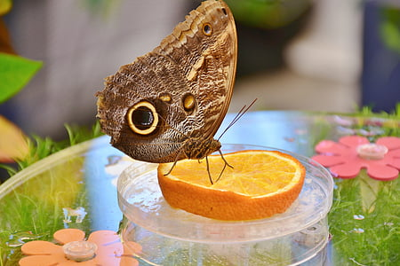 photo of brown butterfly on sliced orange