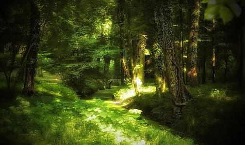 green grass field forest