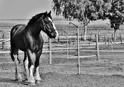 grey-scale photo of horse