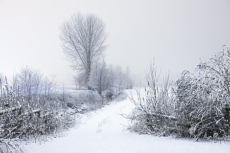 snow-covered field and trees during daytime