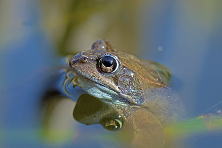 closeup photography of brown toad