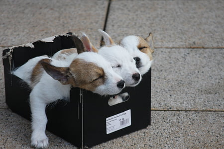 three puppies on black box