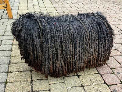 adult black puli standing on pavement