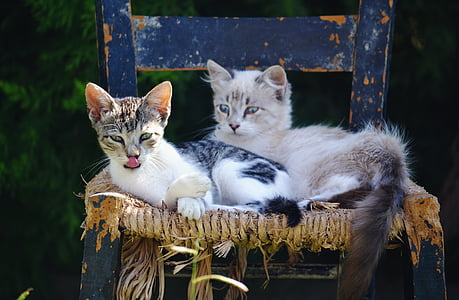 two white cat on laying chair