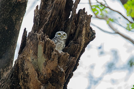 white and gray owl perched on brown tree trunk