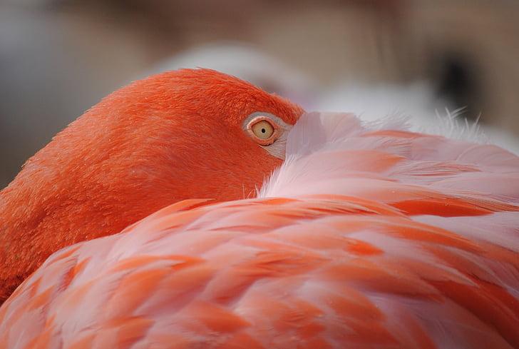 flamingo, bird, birds, pink, feather, exotic