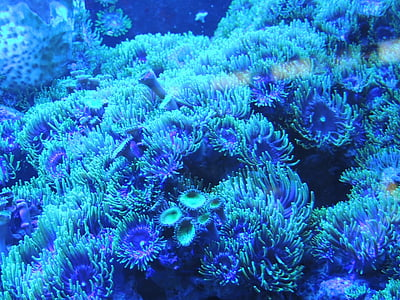 blue corals under sea