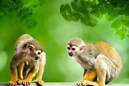 two monkeys looking downward