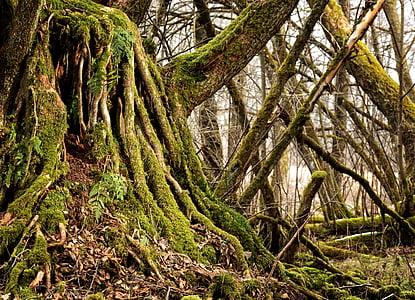 green leafed tree