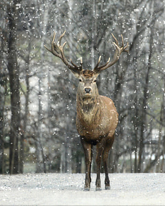 brown reindeer standing on snow during daytime