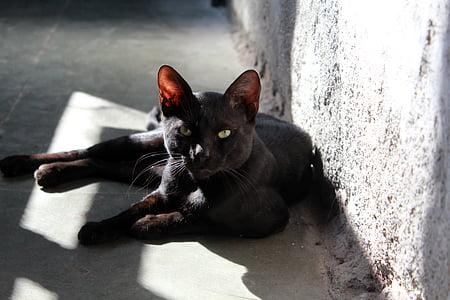 black cat lying on gray concrete pavement