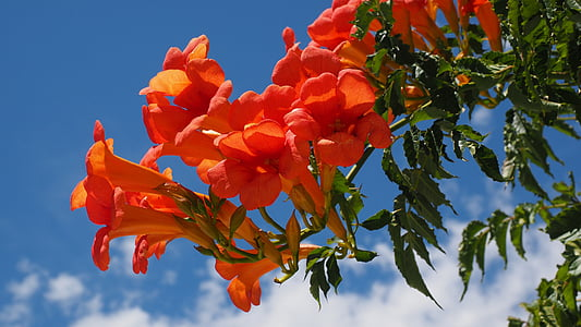 close up photography of orange bell flower