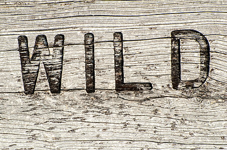 WILD embossed wooden decor