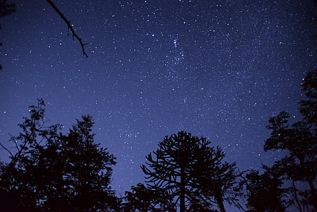 silhouette of trees under stars at night time
