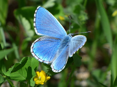 common blue butterfly on green leaf plant