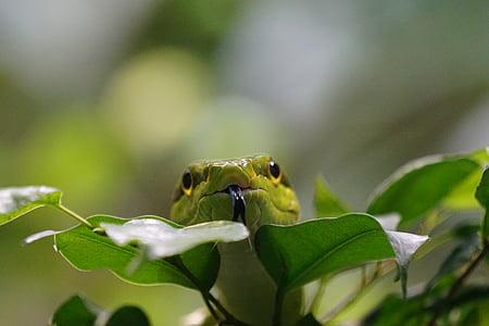green snake on green plants