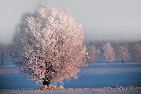 photo of white leafed tree near body of water