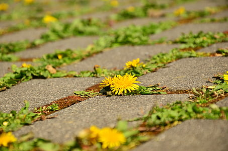 yellow petaled flowers on ground