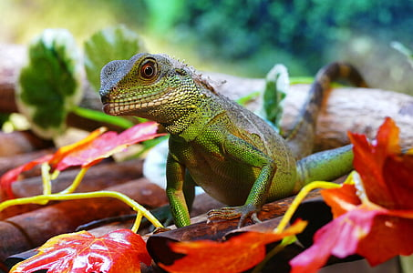 shallow focus of green reptile on red plant