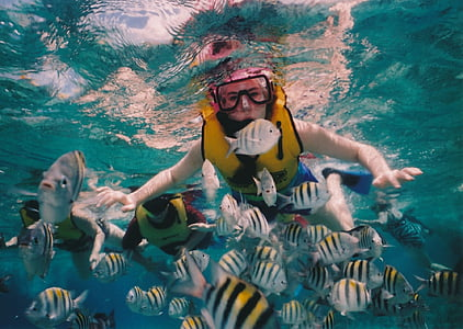 person swimming underwater surrounded by gray-and-black school of fish