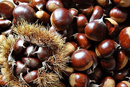 closeup photo of almond nuts