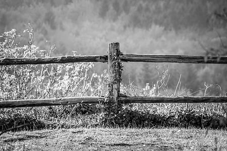 grass growing near fence