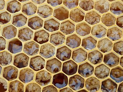 honeycomb closeup photo