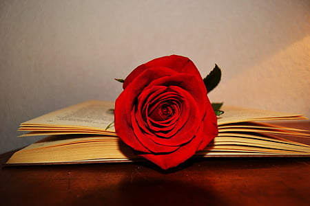 red rose flower on book page