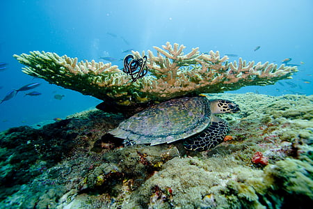 white and black turtle below coral