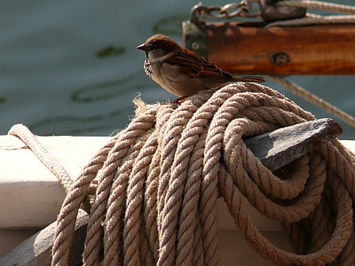 brown and white sparrow bird on brown rope