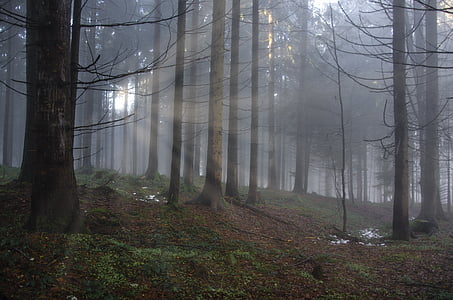 landscape photography of forest at daytime
