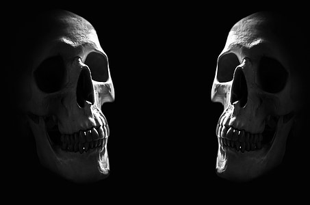 two skulls digital wallpaper