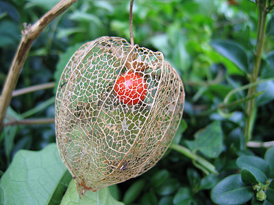 round red fruit