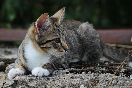 brown tabby cat on floor while looking sideways
