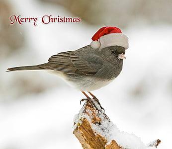 gray bird with merry Christmas text overlay