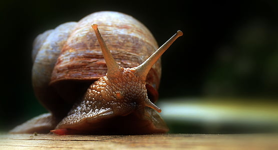 photography of brown snail