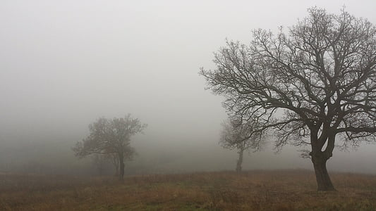 bare trees with thick fog