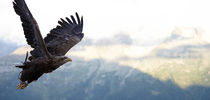eagle flying during day