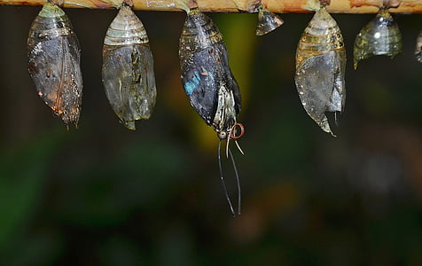 four butterfly cocoon at daytime