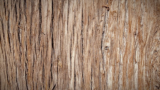 trunk, bark, tree bark, tree, nature, wood