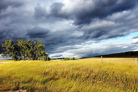 grass field under cloudy sky
