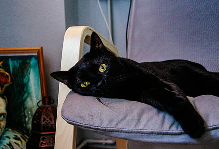 closeup photo of short-fur black cat lying on purple cushion in room
