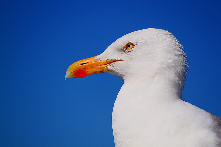seagull photography