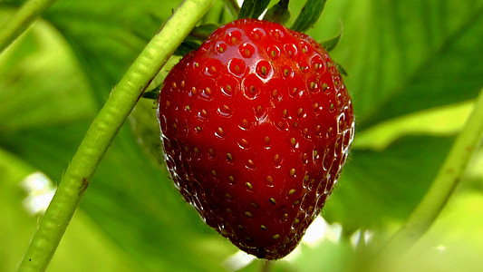 shallow focus photography of strawberry
