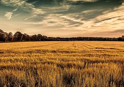 brown grass field under white sky